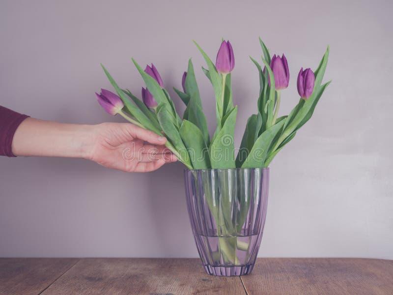 Hand wat betreft purpere tulpen in vaas stock afbeeldingen