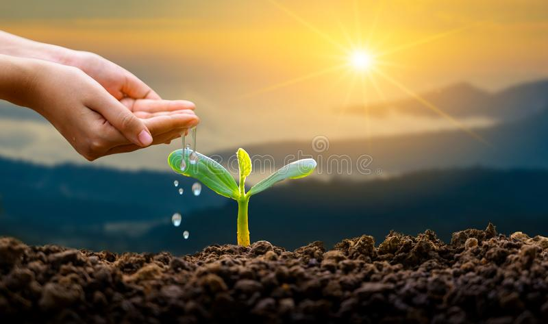 Hand Watering plants tree mountain green Background Female hand holding tree on nature field grass Forest conservation concept royalty free stock photos