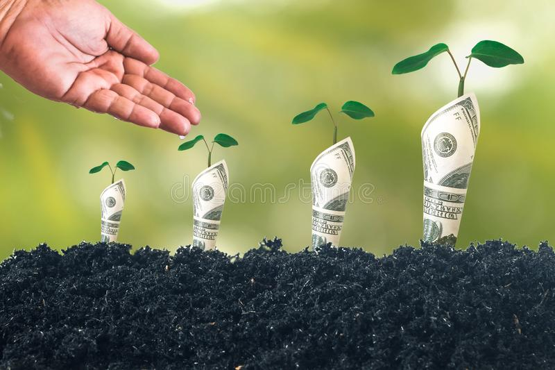 Hand watering to Plant gowned on Bank notes rolled on soil for business, saving, growth, stock images