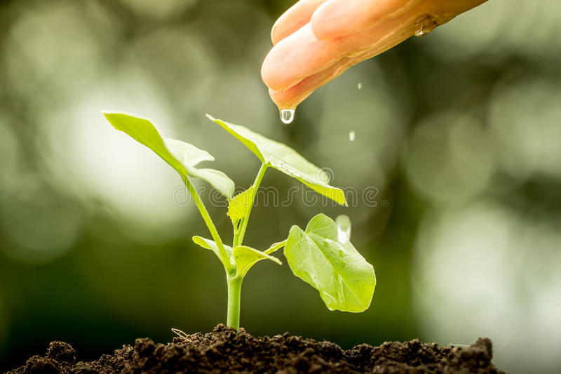 Hand watering young plant royalty free stock photography