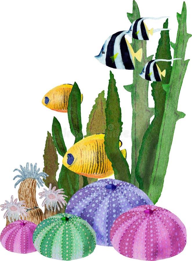 Hand in waterverf overzees wereld natuurlijk element dat wordt getrokken Samenstelling met seaplant vissen, shell op witte achter royalty-vrije illustratie