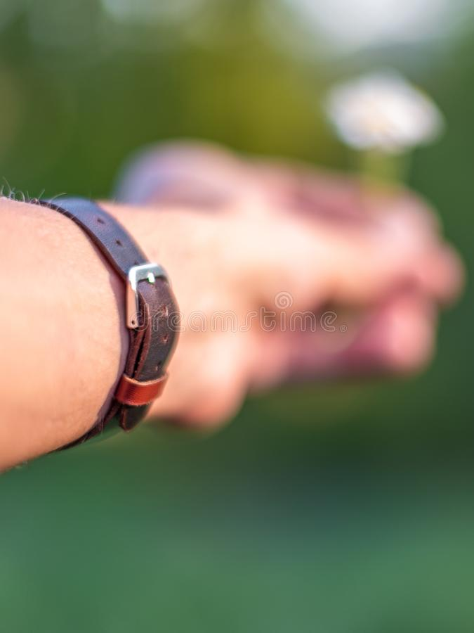 Hand wearing brown leather bracelet giving a daisy. Male hand wearing a wrist watch with brown leather bracelet, holding a daisy flower out of focus royalty free stock photo