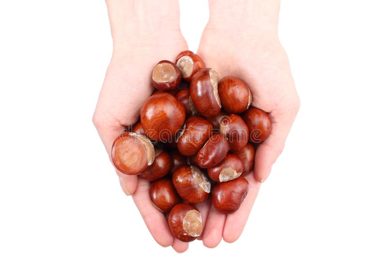 Download Hand Of Woman With Chestnut With White Background Stock Image - Image of chestnut, flora: 33985229