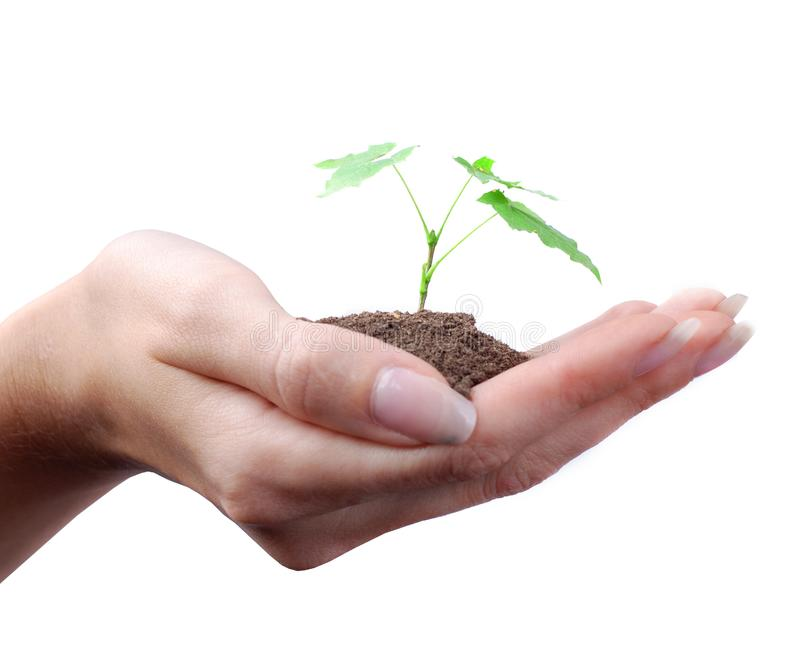 Hand of woman and green sprout stock photos