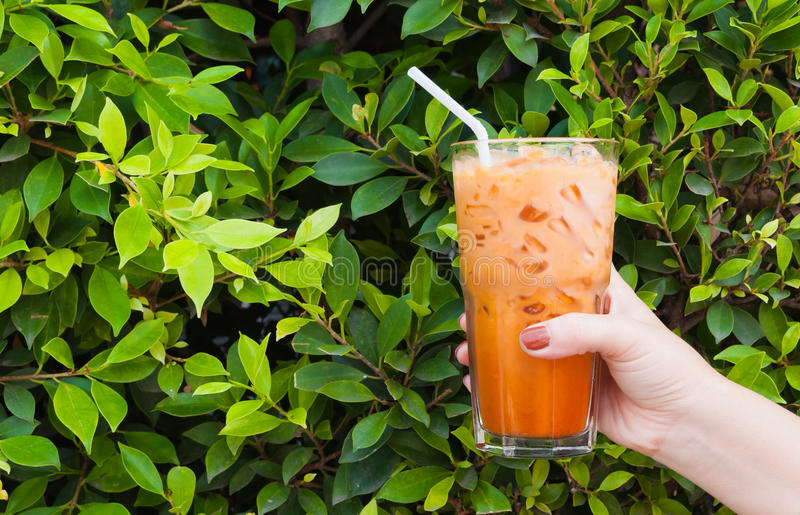 Hand woman holding the glass iced milk tea on green nature royalty free stock images