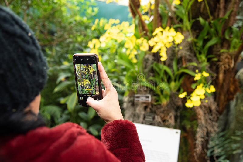 Women taking picture of flowers on her phone stock photo