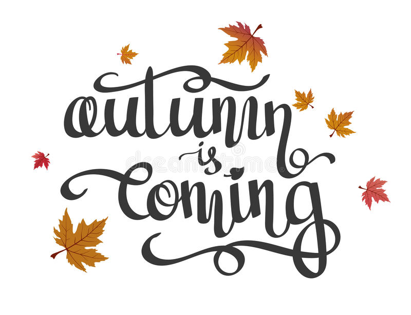 Hand-written lettering, calligraphic phrase Autumn is Coming and flying maple leaves. stock illustration