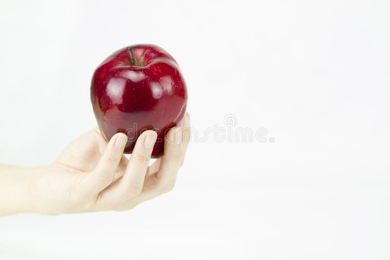 Hand of a young woman holding a red apple like the one offered by the witch to Snow White on white background royalty free stock photography