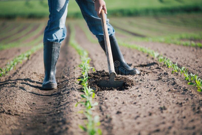 Handarbeid in landbouw stock afbeelding