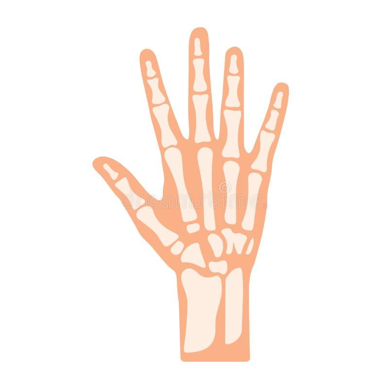 Handben med detaljvektorn vektor illustrationer