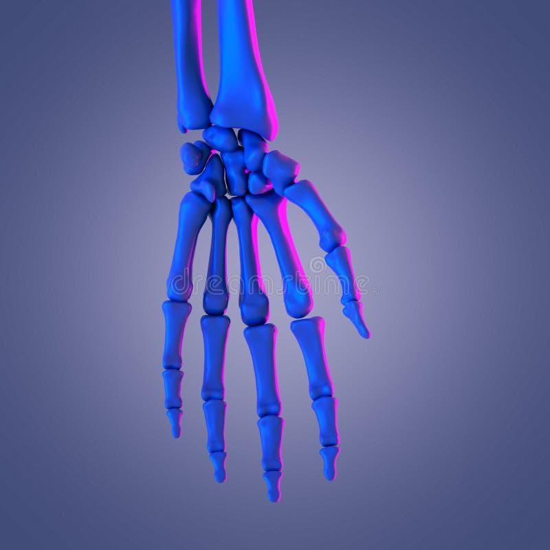Handbenen vektor illustrationer
