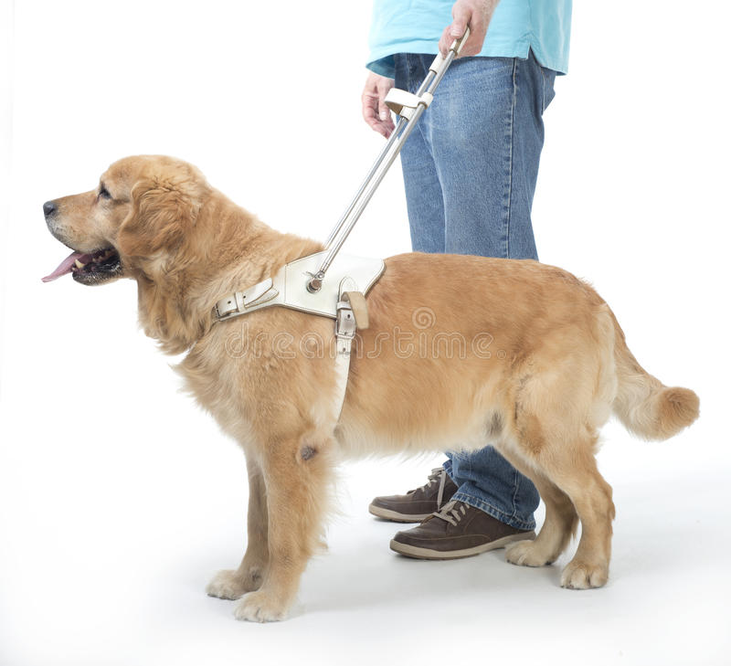 Handbokhund på vit arkivbilder