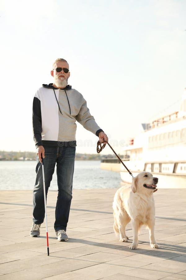 Handbokhund som hjälper den blinda personen med långt gå för rotting arkivbilder
