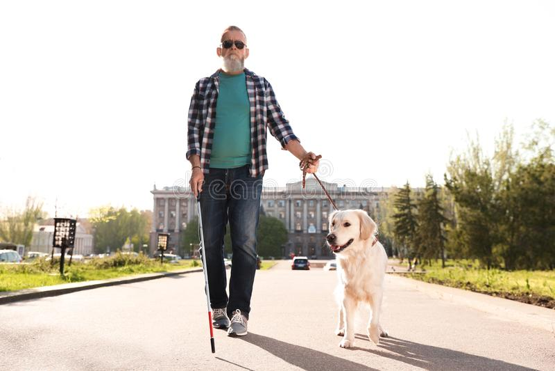 Handbokhund som hjälper den blinda personen med långt gå för rotting royaltyfri foto