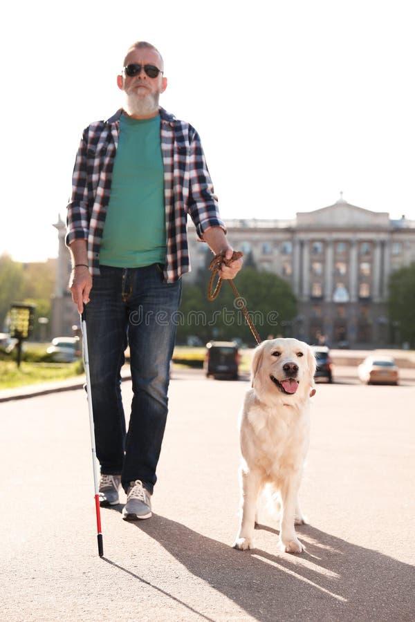 Handbokhund som hjälper den blinda personen med långt gå för rotting royaltyfri fotografi