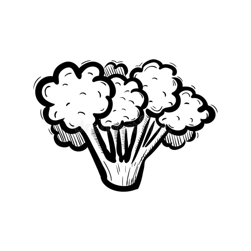 Handdrawn значок doodle брокколи Эскиз нарисованный рукой черный символ знака Элемент украшения Белая предпосылка изолировано Пло иллюстрация вектора
