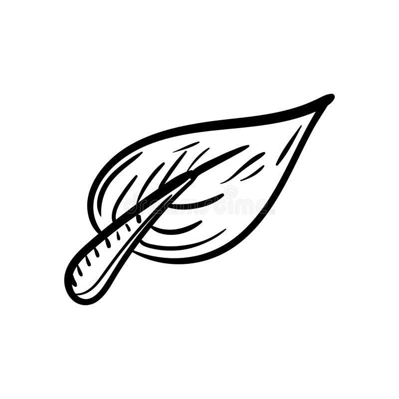 Handdrawn значок doodle лист Эскиз нарисованный рукой черный символ знака Элемент украшения Белая предпосылка изолировано Плоский иллюстрация вектора