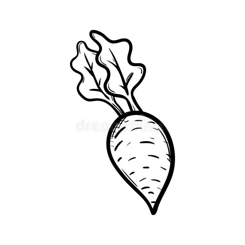 Handdrawn значок doodle свеклы Эскиз нарисованный рукой черный символ знака Элемент украшения Белая предпосылка изолировано Плоск иллюстрация штока