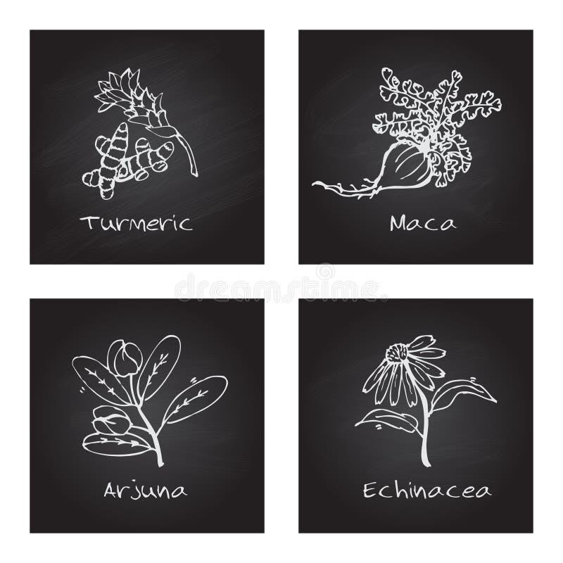 Handdrawn иллюстрация - комплект здоровья и природы бесплатная иллюстрация