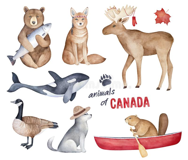 `Animals of Canada` watercolor illustration set. stock illustration