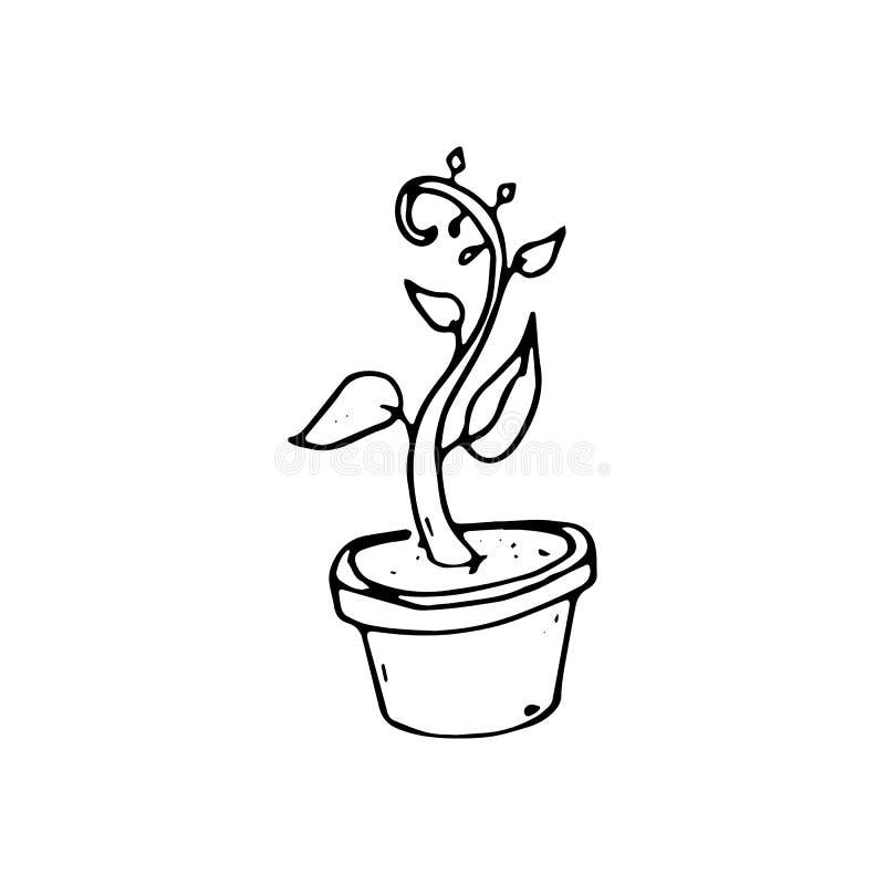 Handdrawn husväxt i krukaklottersymbol Hand dragen svart sketc vektor illustrationer