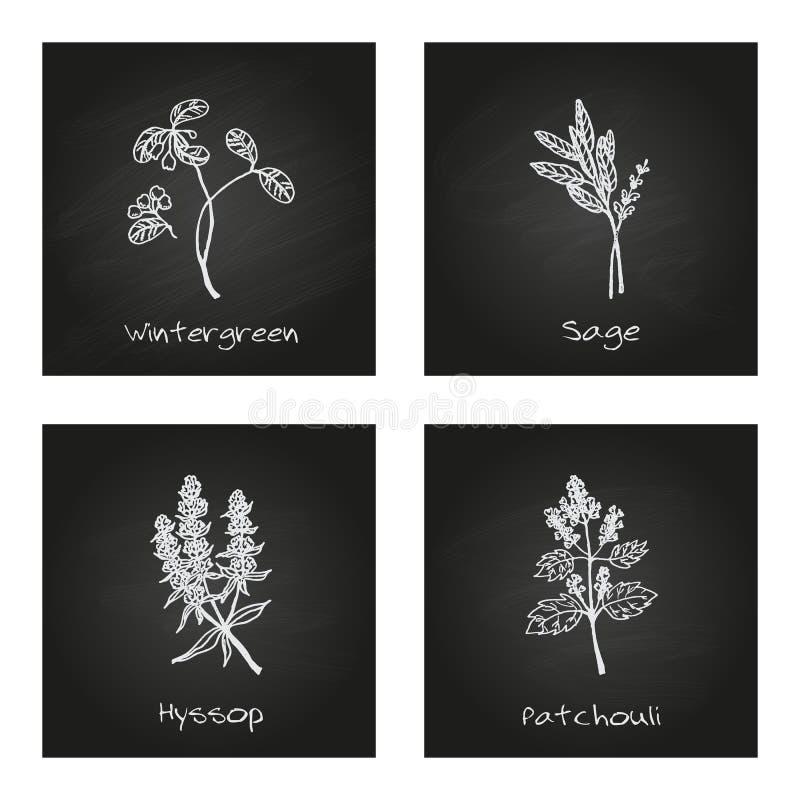 Handdrawn illustration - hälso- och naturuppsättning royaltyfri illustrationer
