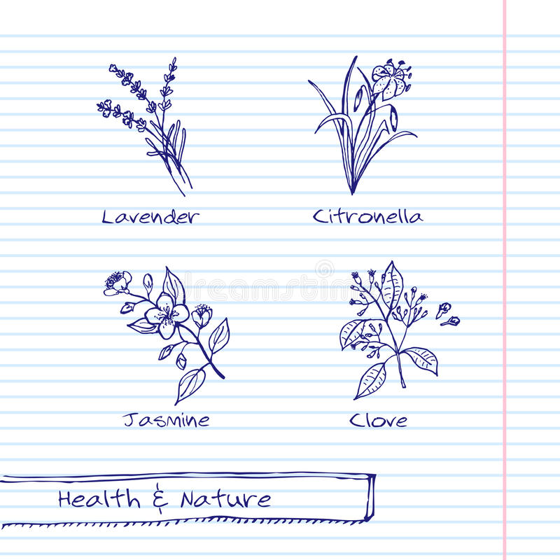 Free Handdrawn Illustration - Health And Nature Set Royalty Free Stock Photo - 47098765