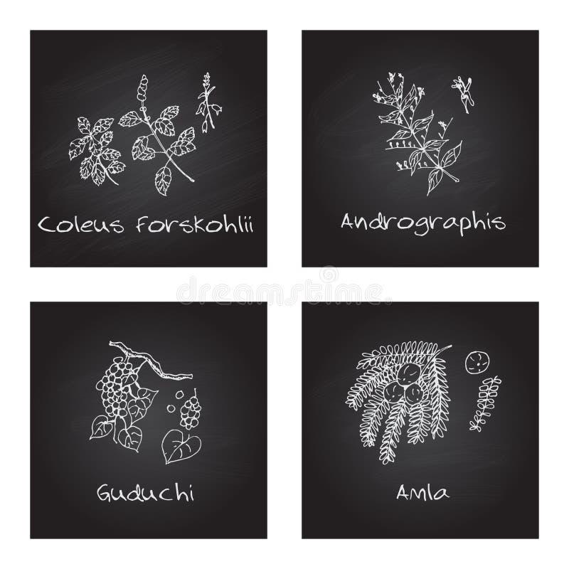 Free Handdrawn Illustration - Health And Nature Set Stock Image - 47717421