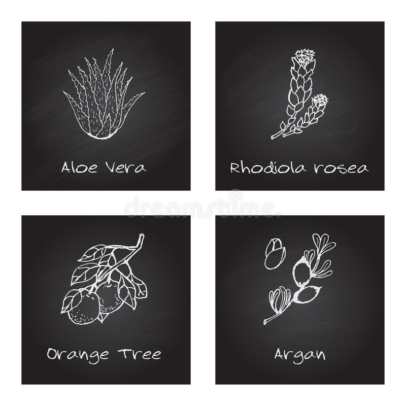 Free Handdrawn Illustration - Health And Nature Set Royalty Free Stock Photography - 47717697