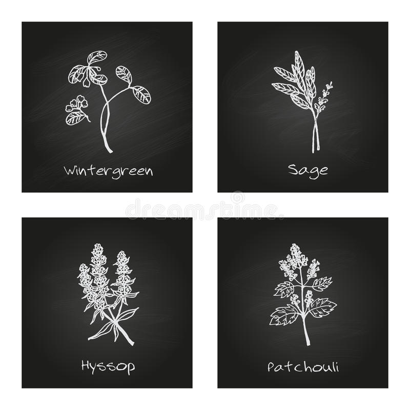 Free Handdrawn Illustration - Health And Nature Set Stock Photos - 48287793