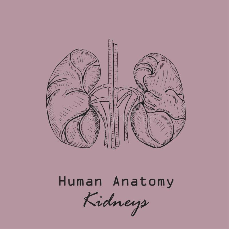 Handdrawn Ludzcy cynaderki royalty ilustracja