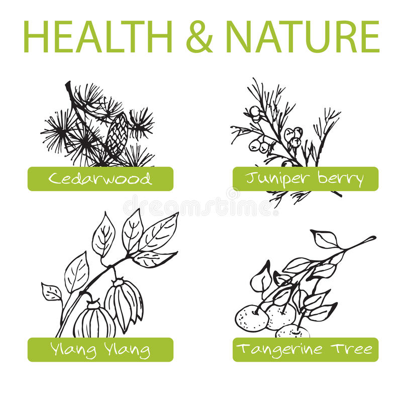 Handdrawn Set - Health and Nature. Collection of. Medicine Herbs. Labels for Essential Oils and Natural Supplements. Ylang Ylang, Tangerine, Cedarwood, Juniper stock illustration