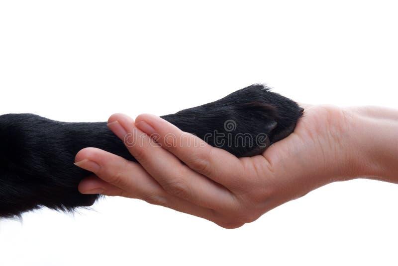 Handdruk tussen hond en hand stock foto's