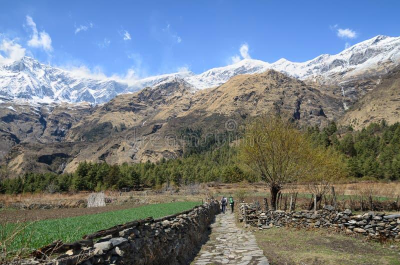 Handelsresande som fotvandrar till och med risfält och snöig berg på bakgrunden royaltyfri foto