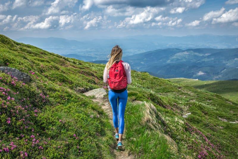 Handelsresandeflicka eller kvinna med ryggsäcken som går vandringbanan i berg Utvändig sommarblommarue royaltyfria foton