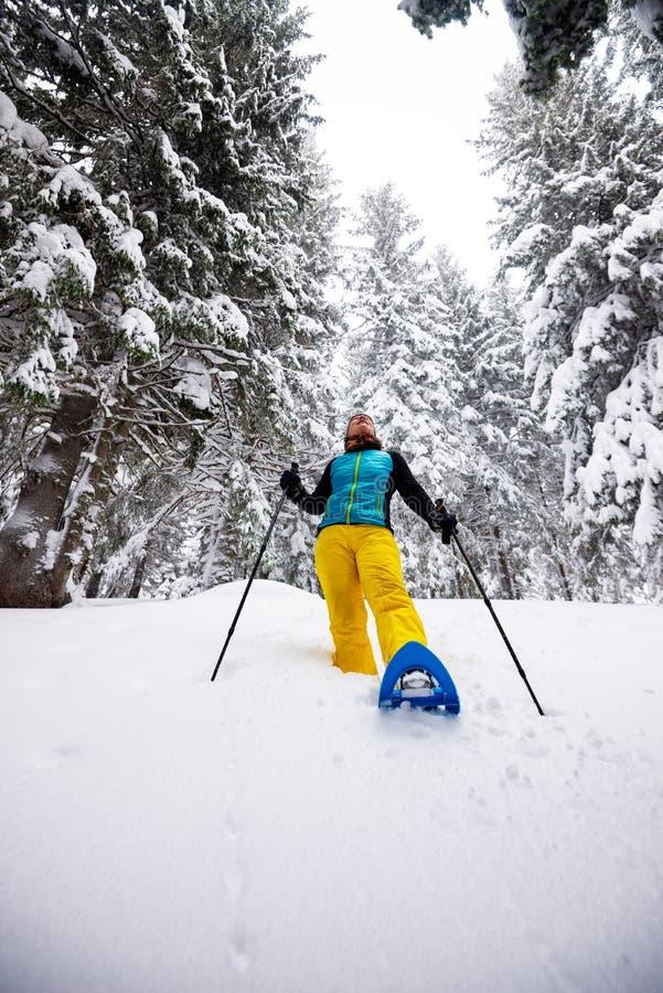 Handelsresanden kvinna går snowshoeing bland enormt sörjer träd royaltyfria foton