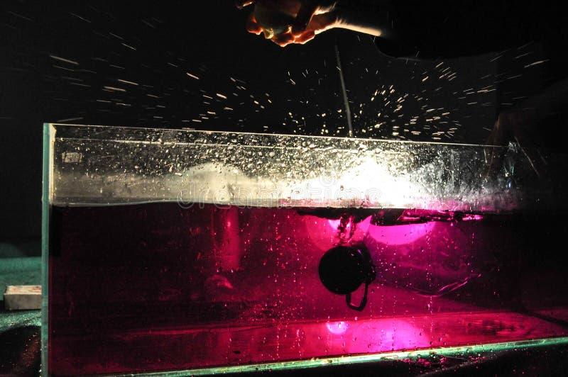 Handen die een citroen laten vallen in het roze water in de watertank stock afbeelding