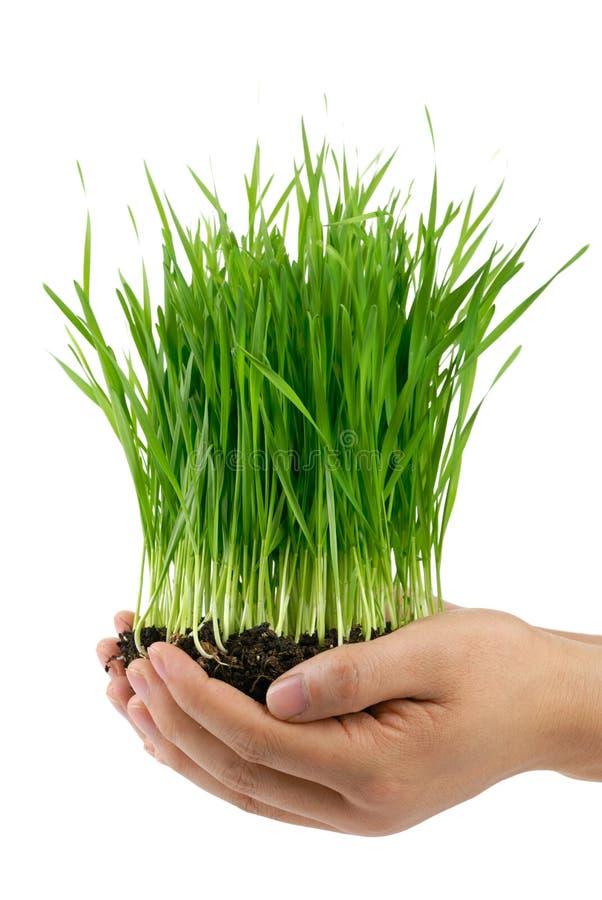 Handen die groen gras houden royalty-vrije stock afbeeldingen