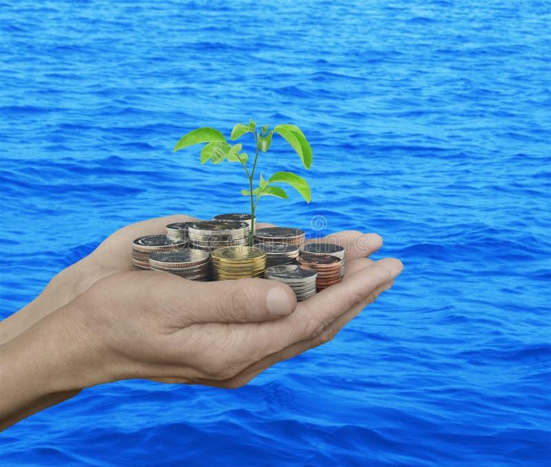 Handen die het verse groene boom groeien op muntstukken over blauwe overzees houden stock afbeeldingen