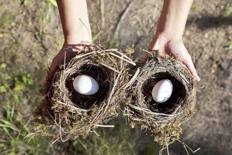 Handen die nest met ei houden stock fotografie