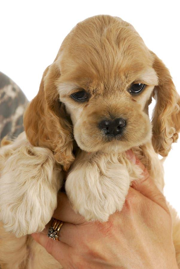 Handen die puppy houden royalty-vrije stock afbeeldingen