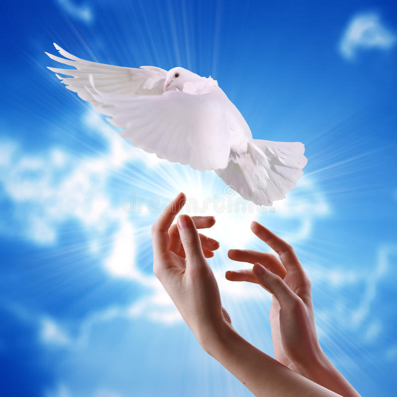 Handen die witte duif vrijgeven van hemel aan de zon