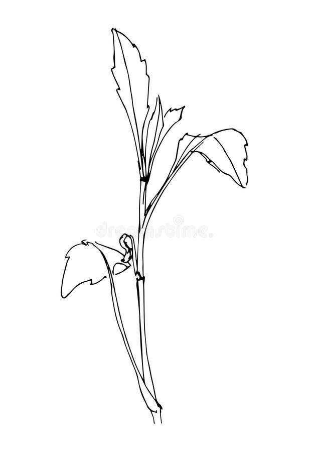Handen dragen svart stiliserade blomman som målades av eyeliner också vektor för coreldrawillustration royaltyfri illustrationer