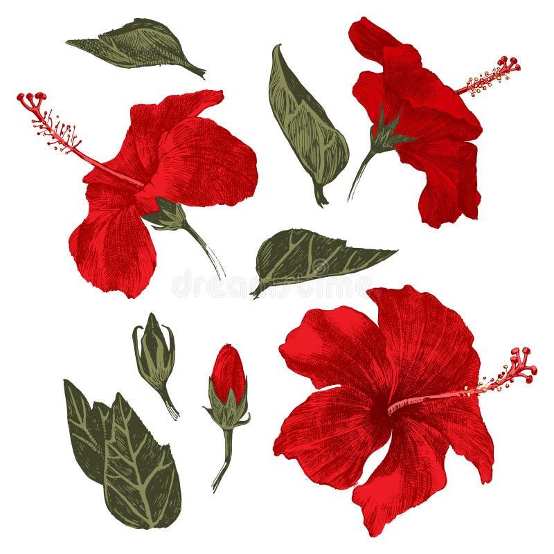 Handen drog hibiskusen lämnar, blommar och slår ut stock illustrationer