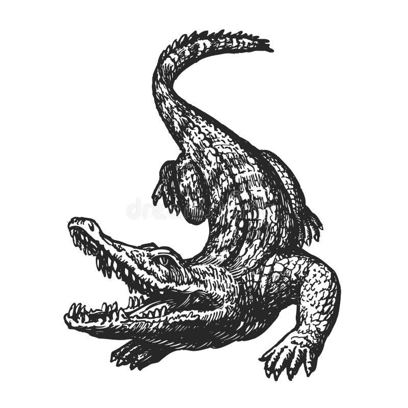 Handen drog ilskna krokodilen med den öppna munnen, skissar Croc jätte- alligator, alligatorvektorillustration stock illustrationer