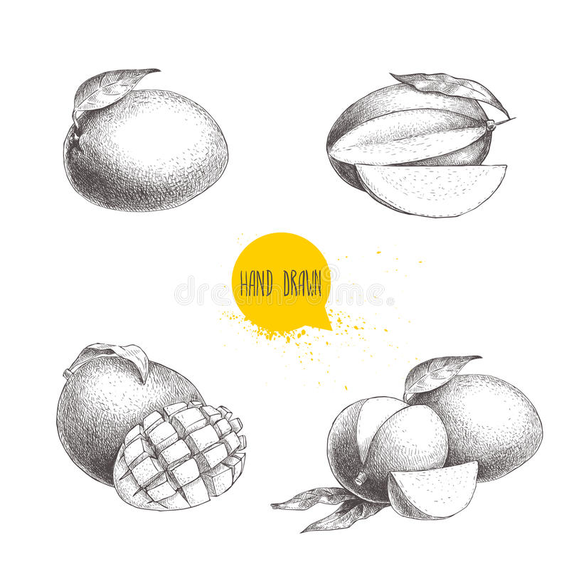 Handen drog mangofrukter ställer in med blad, och mango skivar och kuber stock illustrationer