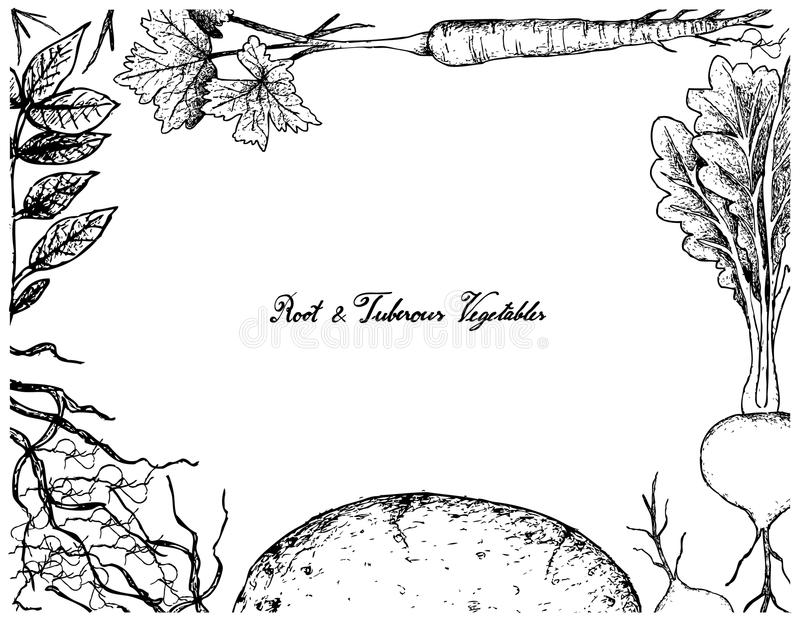 Handen drog ramen av rotar och Tuberous grönsaker vektor illustrationer