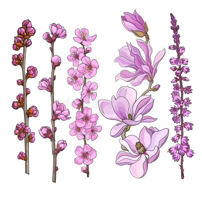 Handen drog rosa färgen blommar - magnolian, äpplet och den körsbärsröda blomningen, ljung stock illustrationer