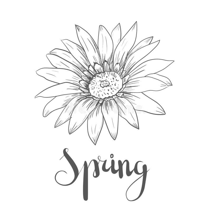 Handen drog vektorpennan och färgpulverillustrationen av Gerberatusenskönan blommar vektor illustrationer