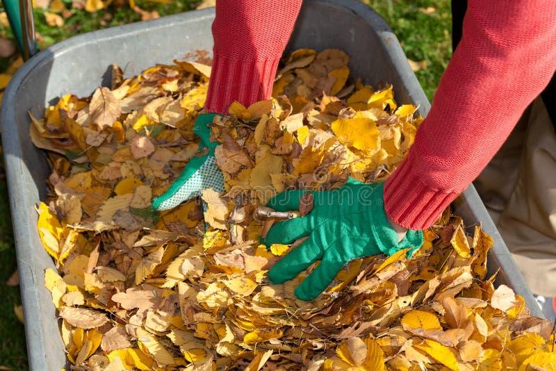 Handen en bladeren stock fotografie